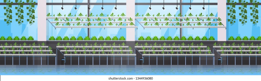 organic hydroponic green plants row cultivation farm modern greenhouse interior farming system concept horizontal banner