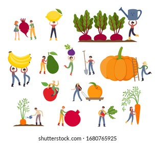 Organic production cartoon vector illustration with tiny people - farmers in modern style with big fruits and vegetables - pumpkin, beet, bananas, peach, carrots and avocado isolated on white.