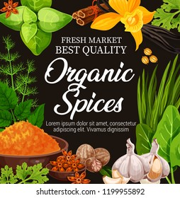 Organic spices, seasoning herbs and herbal flavorings. Cooking or farm market. Vector garlic, vanilla or turmeric curcuma, dill with mint and nutmeg, star anise or cinnamon and sorrel