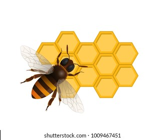 Organic sweet nutrition concept with honeybee on honeycomb isolated on white background. Traditional and healthy vegan product vector illustration. Insect sign for natural food production design.