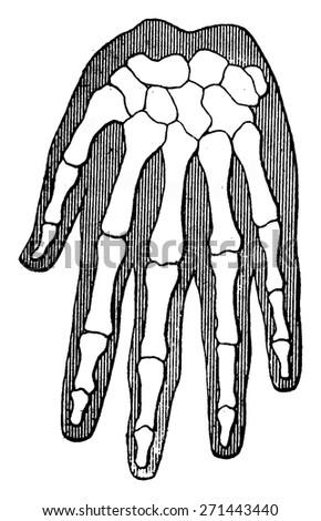 Organic Unity Kinship Beings Human Hand Stock Vector (Royalty Free