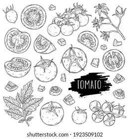 Organic vegetable tomato set. Hand drawn whole tomatoes, slices, half, flower, branch with leaves and cherry tomatoes isolated on white background with label. Outline ink style sketch. Vector coloring