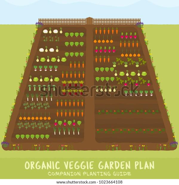 Organic Veggie Garden Plan Companion Planting Stock Vector