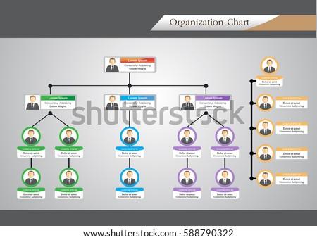 organization chart infographics stock vector royalty free