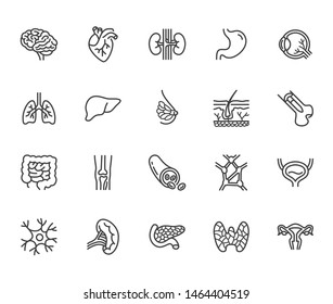 Organs, anatomy flat line icons set. Human bones, stomach, brain, heart, bladder, nervous system vector illustrations. Outline pictograms for medical clinic. Editable Strokes.
