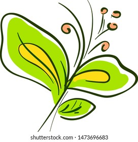 An oriental bittersweet with green and yellow leaves, vector, color drawing or illustration.