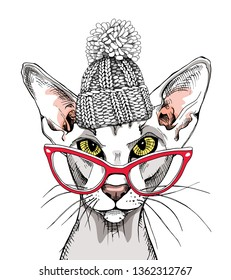 Oriental Shorthair cat in a glasses and in a knitted hat. Humor card, t-shirt composition, hand drawn style print. Vector illustration.