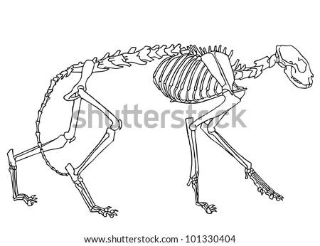 Original Black White Drawing Cat Skeleton Stock Vector Royalty Free