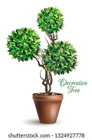Original decorative tree in pot on white background. Bonsai tree. Houseplant. Vector illustration.