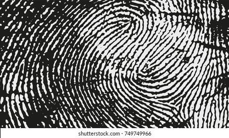 Original fingerprint pattern. Black stripes on white background. Vector illustration.