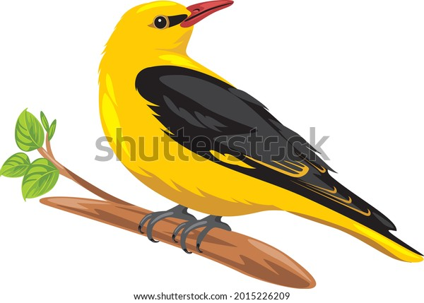oriole-sits-on-branch-vector-600w-201522