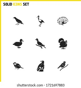 Ornithology icons set with turtledove, finch bird and eagle elements. Set of ornithology icons and starling bird concept. Editable vector elements for logo app UI design.