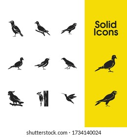 Ornithology icons set with turtledove, humming bird and cockatoo elements. Set of ornithology icons and starling bird concept. Editable vector elements for logo app UI design.