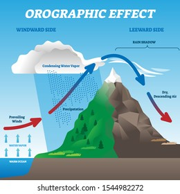 Orographic effect vector illustration. Labeled weather system movement scheme. Educational diagram with windward and leeward side. Prevailing winds, precipitation and condensing water vapor phenomena.