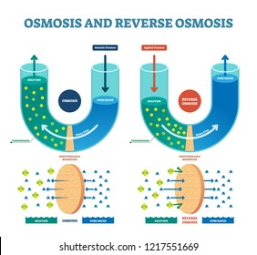 Osmosis reverse vector illustration. Explained process with water example. Pressure, flow and pure water scheme. Spontaneous net movement of solvent molecule membrane.