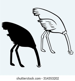 Ostrich burying its head in sand. Isolated on blue background