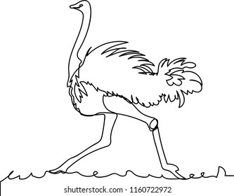 ostrich. Doodle. continuous sketch. one line