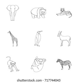 Ostrich emu, crocodile, giraffe, tiger, penguin and other wild animals. Artiodactyla, mammalian predators and animals set collection icons in outline style vector symbol stock illustration web.