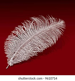 ostrich feather, vector illustration