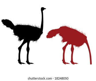 Ostrich Illustration in the sand and out standing up