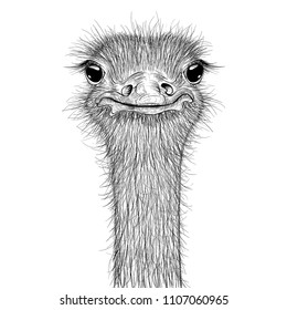 Ostrich sketch. Head closeup. Vector illustration isolated on white background