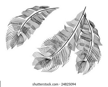 Ostrich's feathers