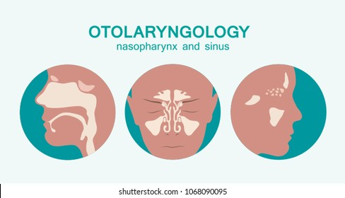 Otolaryngological icons - nasopharynx and sinuses - vector illustration