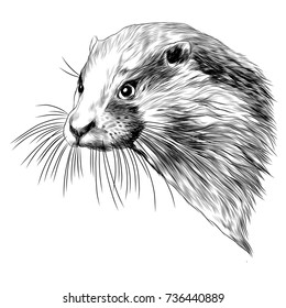 otter sketch head vector graphics monochrome black-and-white drawing