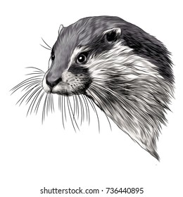 otter sketch head vector graphics color picture