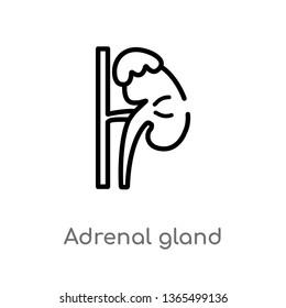 outline adrenal gland vector icon. isolated black simple line element illustration from medical concept. editable vector stroke adrenal gland icon on white background