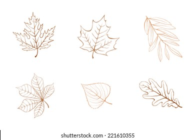 Outline Autumn Leaves. Maple, Chestnut, Sycamore, Oak Leaves.