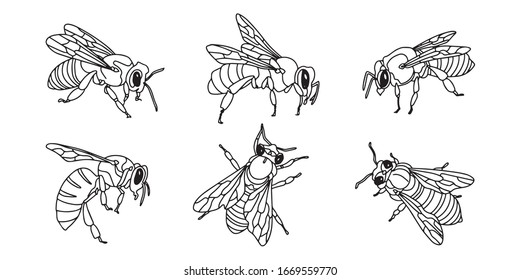 Outline bee set. Simple doodle style. Vector stock illustration
