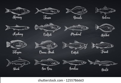 Outline fish. Engraved seafood with bream, mackerel, tuna or sterlet, catfish, codfish and halibut. Tilapia, ocean perch, sardine, anchovy, sea bass and dorado. Chalkboard style, vector illustration