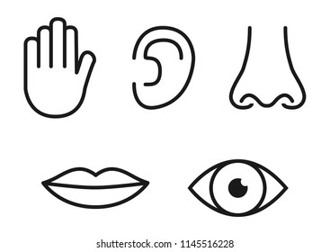 outline of the anatomy of the ear images stock photos vectors