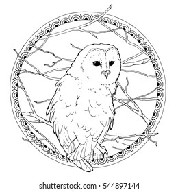 outline illustration of the barn owl