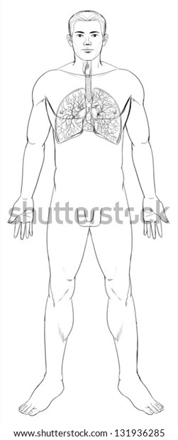 Outline Illustration Human Respiratory System Stock Vector