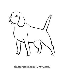 Outline isolated illustration of beagle dog breed