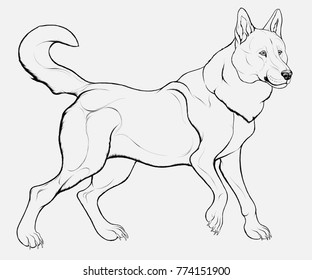 Outline picture of Siberian Laika with a twisted tail. Realistic vector illustration of a curious furry husky in grayscale. Image of a dog, which can be used as an emblem for kennel club.
