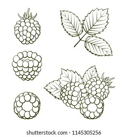 Outline ripe raspberries and blackberries with leaves on a white background. Set icons. Design for a label, banner, poster. Vector illustration.