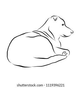 Outline sketch of dog. Vector animal