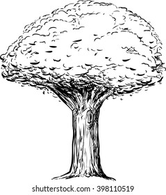 Outline sketch of tree with thick trunk over white background
