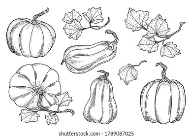 Outline vector pumpkins with leaves set. Hand drawn black contour gourds isolated on white background. Vintage autumn vegetable collection for cards, coloring book, decoration
