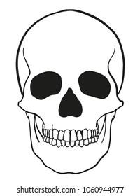 outline vector skull in black