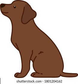 Outlined chocolate Labrador sitting in side view