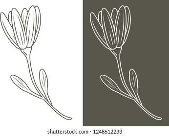 Outlined flower isolated on white and dark background. Vector