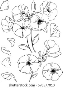 Outlined Flowers. Springtime