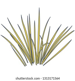 Outlined vector isolated reed. Yellow water plants in different variant, isolated on white background. Isometric clumps of reeds growing on pond. Individual rushes flower bamboo reed with green leafs