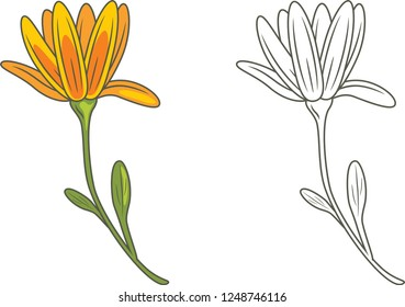 Outlined and yellow flower isolated on white. Vector