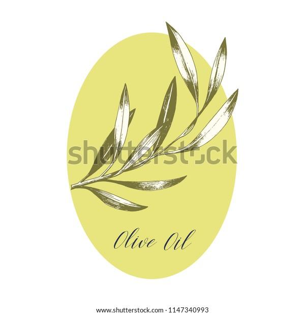 Oval olive oil label. Hand drawn vector illustration. Package design.