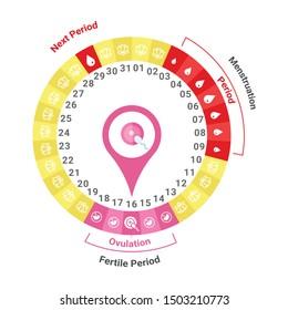 Ovulation period infographic, fertile period, menstruation.